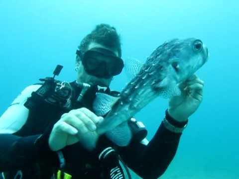Duiker ontdoet kogelvis van een vishaak