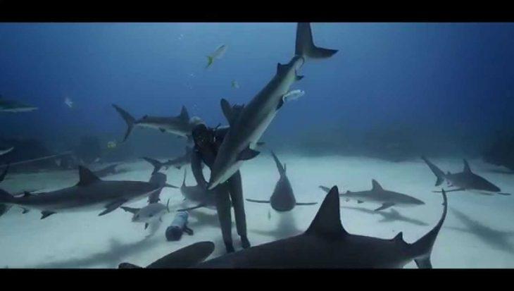 Dansen met haaien