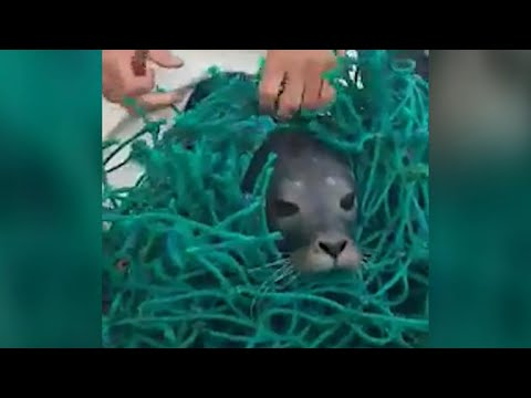 Redding baby zeehond