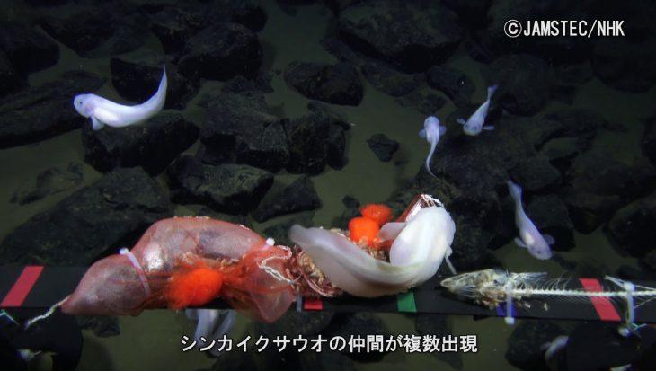 Diepst zwemmende vissen ooit gefilmd