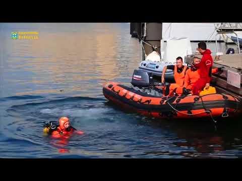 Brandweerduikers begeleiden gestrande walvis haven van Marseille uit