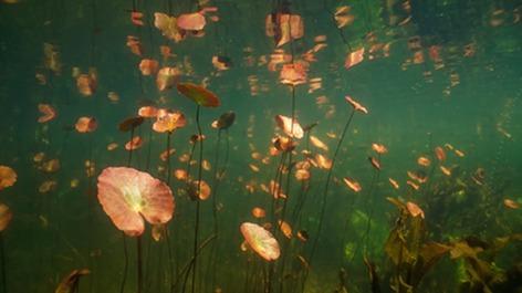 Het Geheim van de Zee en Waterlicht