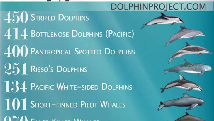 Vangstquotum Japanse vissersplaats Taiji: 1940 dolfijnen