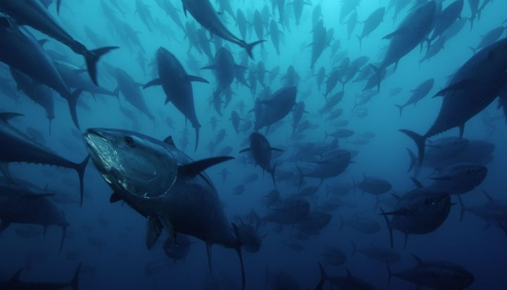 40 tonijnen bij Denemarken en Zweden voorzien van satellietzender