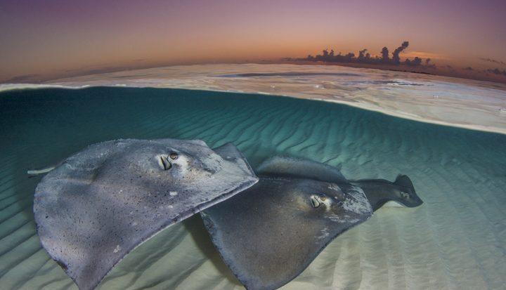 Secrets of the seas, interview Alex Mustard