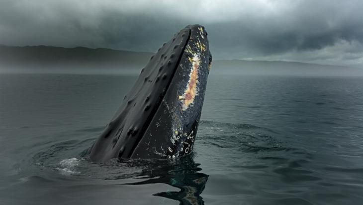 Newfoundland: Wildlife & More
