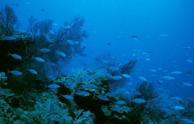Rapport drukt waarde toerisme Barri貥rif van Belize uit in cijfers