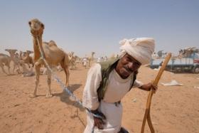 Egypte – Marsa Alam – Kamelen, sterren en koralen.