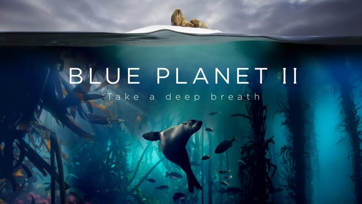 Blue Planet II vanaf 28 december op NPO1