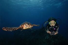 Aruba – Laat je meevoeren naar de Caran