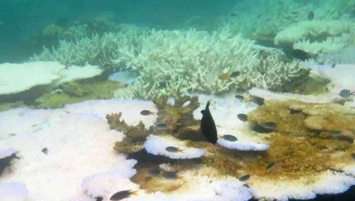 Simpele oplossing voor stervend koraal?