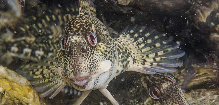 Bijzondere zeeviswaarnemingen in Zeeland
