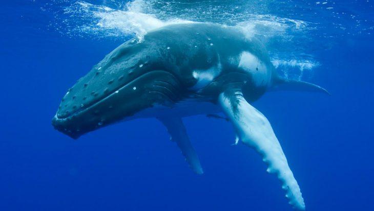 Duikgedrag van walvisachtigen