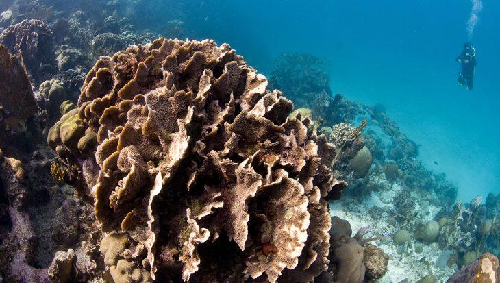 Belize heeft een moratorium aangekondigd op offshore olieboringen
