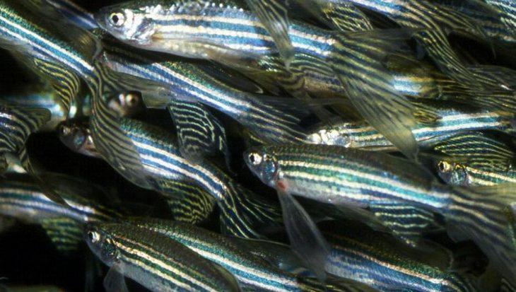 Vissen met ontwenningsverschijnselen