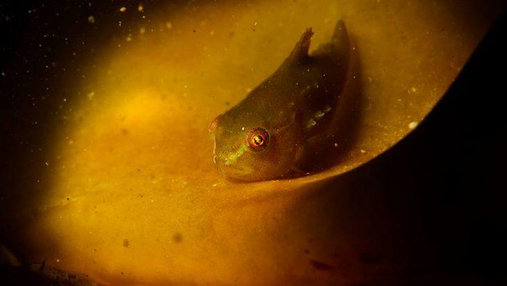 Data ONK Onderwaterfotografie bekend