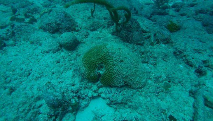 Save Our Sharks crowdfundingcampagne voor Sint Maarten