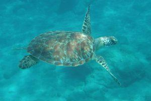 schildpadden Eustatius