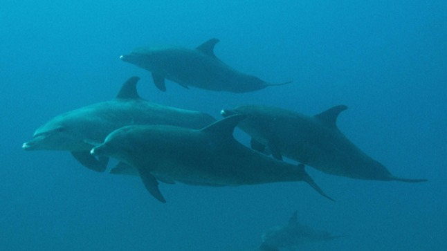 Mijn duikavontuur met dolfijnen