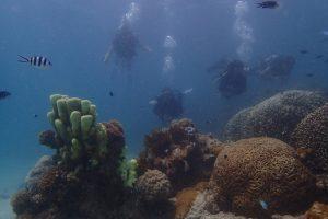 duik kenia Kisite