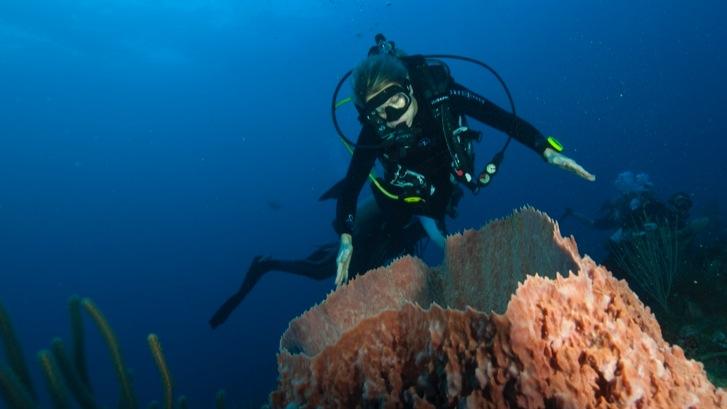 Koninklijk paar vraagt met duik op Sababank aandacht voor koraalriffen