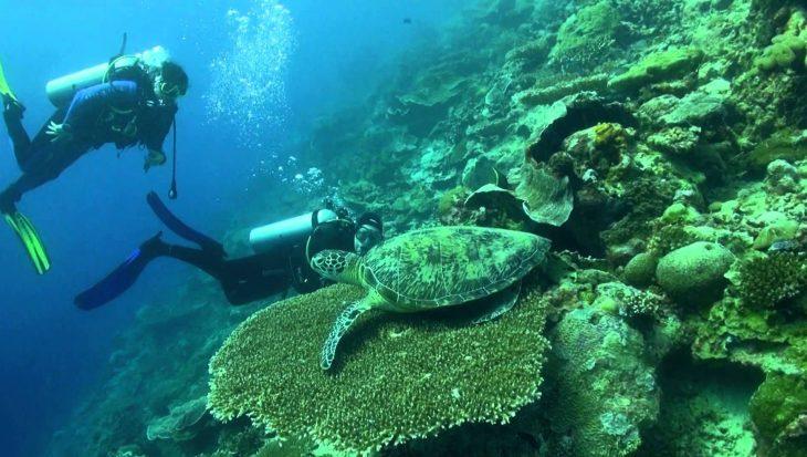 Gave duik bij Indonesisch Maratua Atol met zeeschildpadden