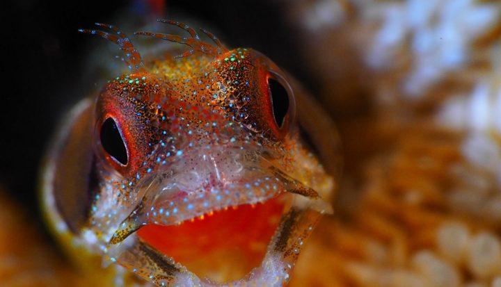 WK-Onderwaterfotografie; fantastische ervaring rijker