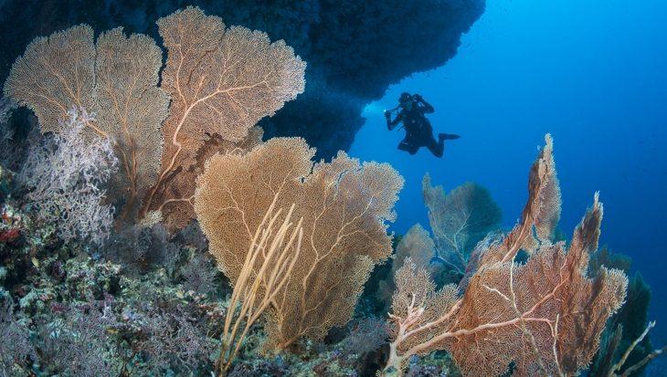 20 redenen om een live-aboard duiktrip in de Malediven te kiezen