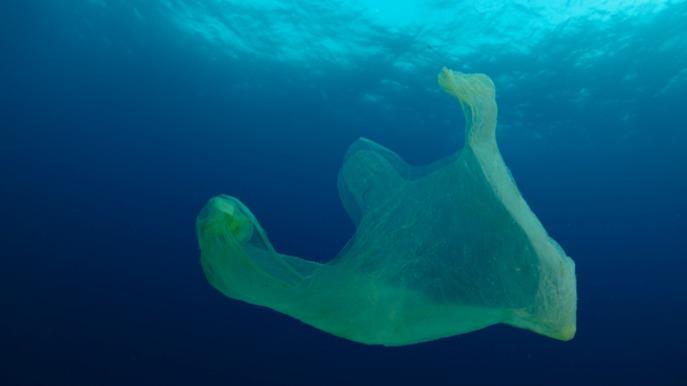 Organismen in zee kunnen plastic tasje in wel 1,75 miljoen kleine stukjes 'scheuren'