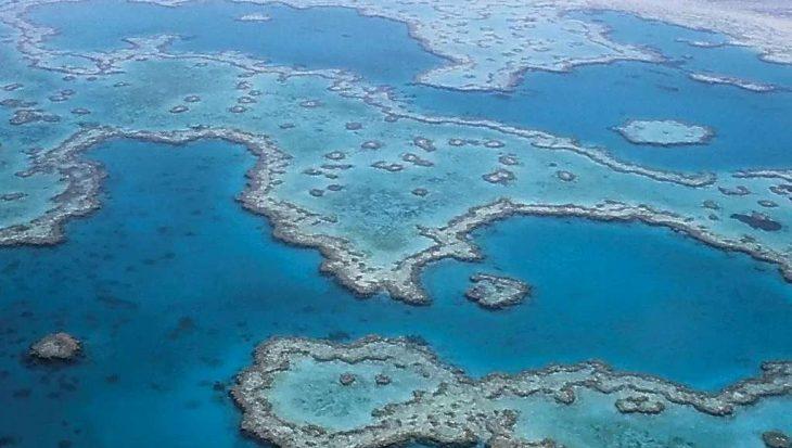 Koraallarven redding beschadigd Great Barrier Reef?