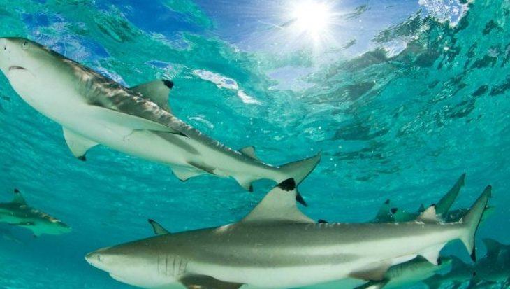 Freek Vonk duikt in de wereld van haaien