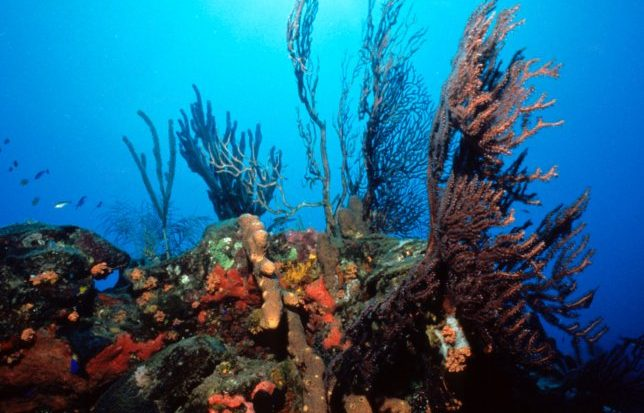 STENAPA viert twintig jaar succesvol beheer Marine Park Sint Eustatius