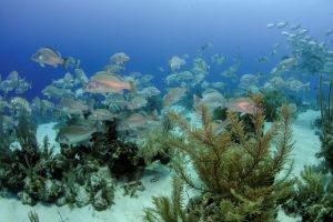 Belize lezersreis