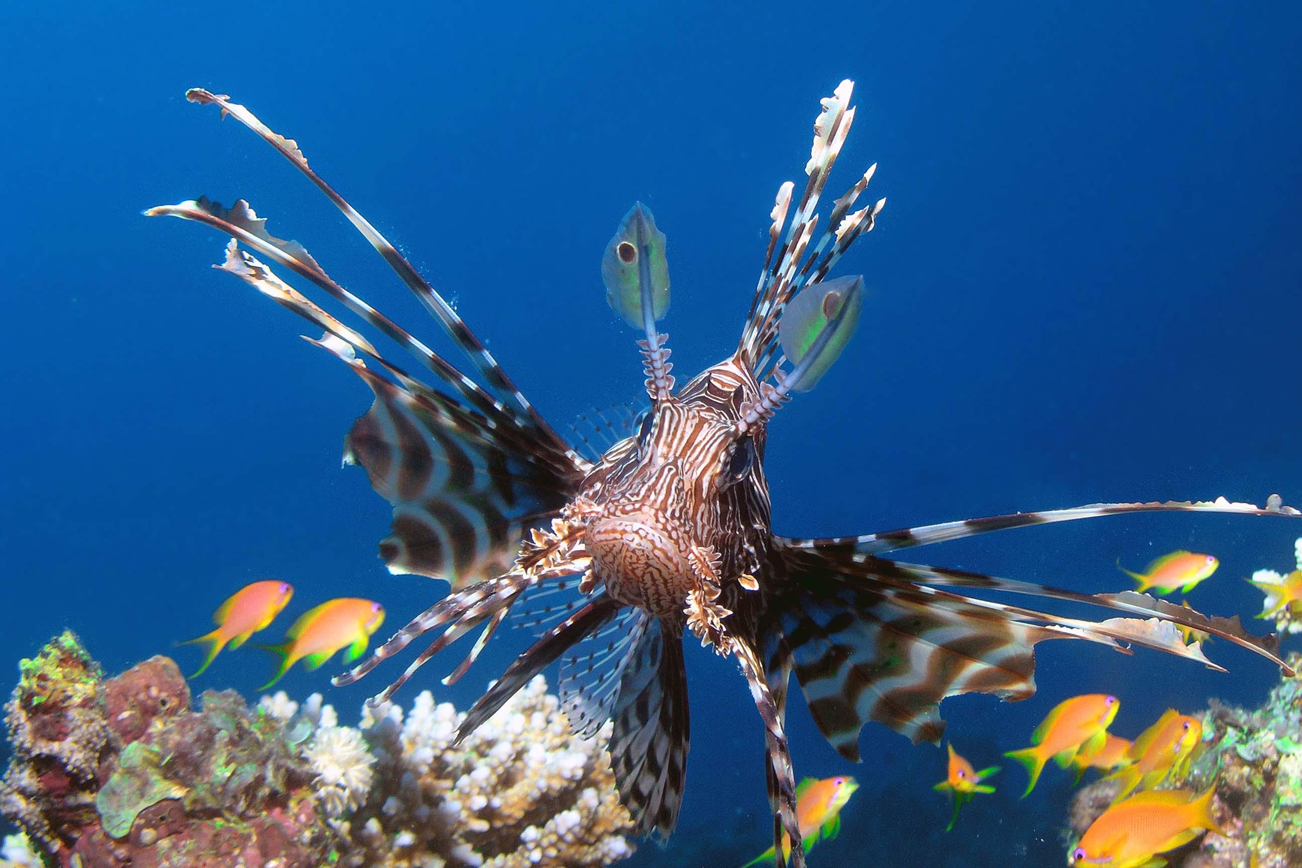 close-up koraalduivel