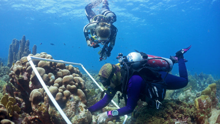 Koralen zaaien, nieuwe aanpak maakt koraalrifrestoratie op grote schaal mogelijk