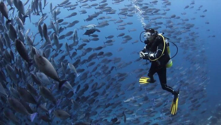 Must see! Adembenemende beelden van Papua Diving Resorts