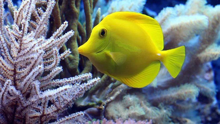 De oceaan in ademnood: zuurstofarme gebieden in halve eeuw verviervoudigd