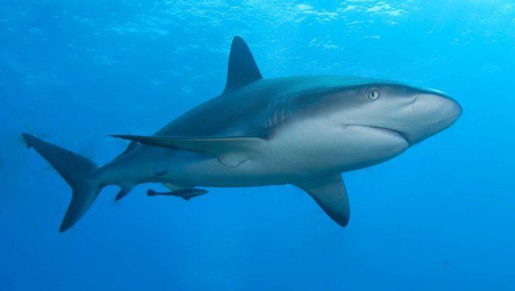 Datum Dutch Caribbean Shark Week 2018 bekend