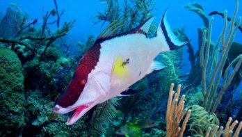 Adembenemende duik in verborgen onderwatertuin - Cuba