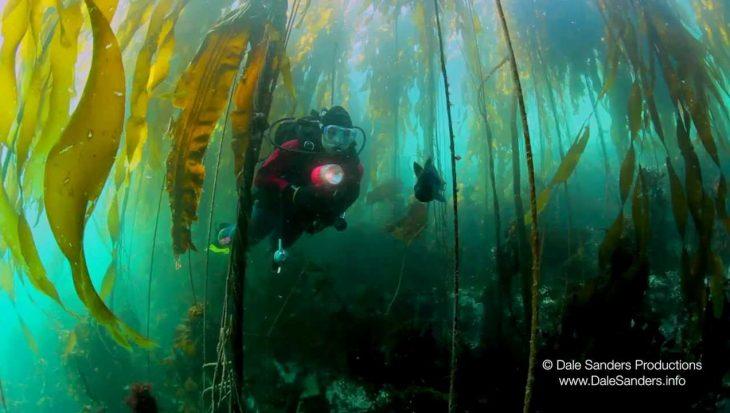 Gave beelden duik Brits-Columbia