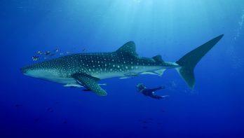 Malediven toegankelijker door samenwerking Emperor en Diving World