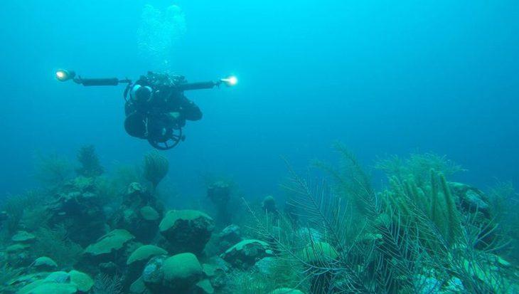 Nieuwe oceaanzone ontdekt met meer dan 100 nieuwe dier- en plantensoorten