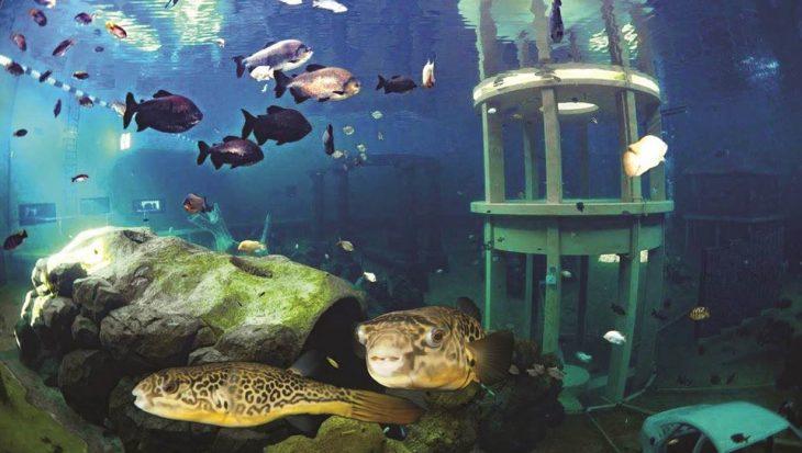 Verzin jij de naam voor nieuwste kogelvis van TODI?