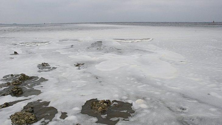 Na vijf jaar weer een extreem zware algenbloei