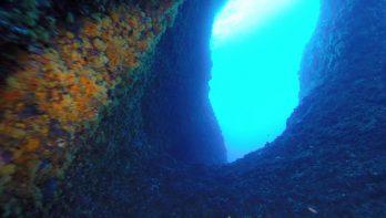 De onderwaterwereld van sardinië: super gevarieerd!