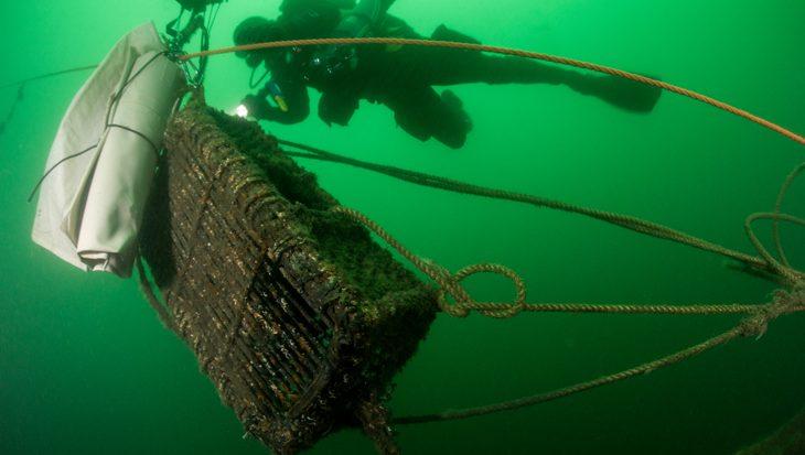 Duikers leggen meer dan 150 verschillende soorten vast tijdens Expeditie Noordzee
