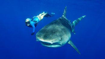 Adembenemende freedive: één van hen