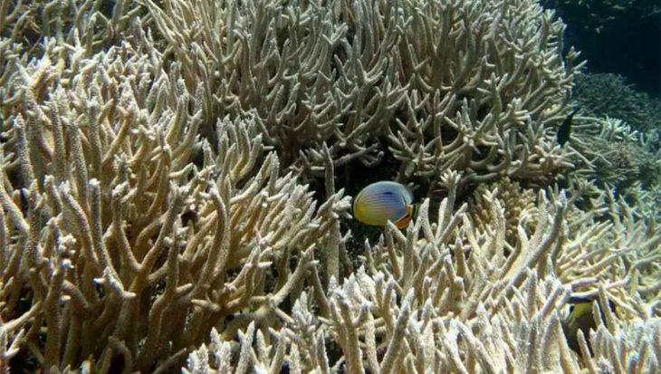 Zeespiegelstijging gaat veel te snel voor koraalriffen