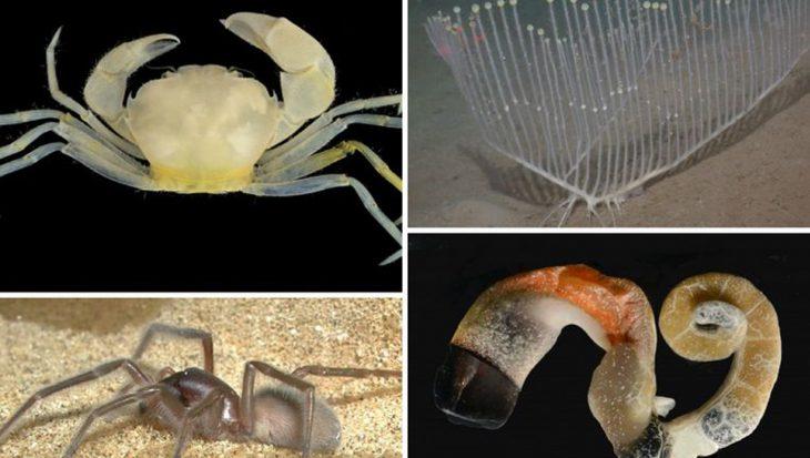 In de laatste 10 jaar 20.000 nieuwe zeedieren ontdekt
