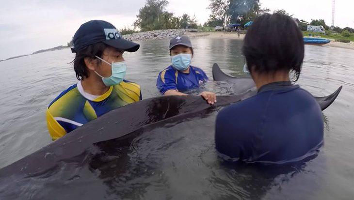 Walvis sterft na eten van meer dan 80 plastic zakken